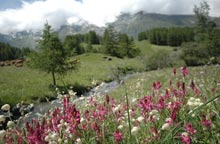 Sainte Foy summer flowers